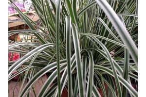 Bamboe en Siergrassen
