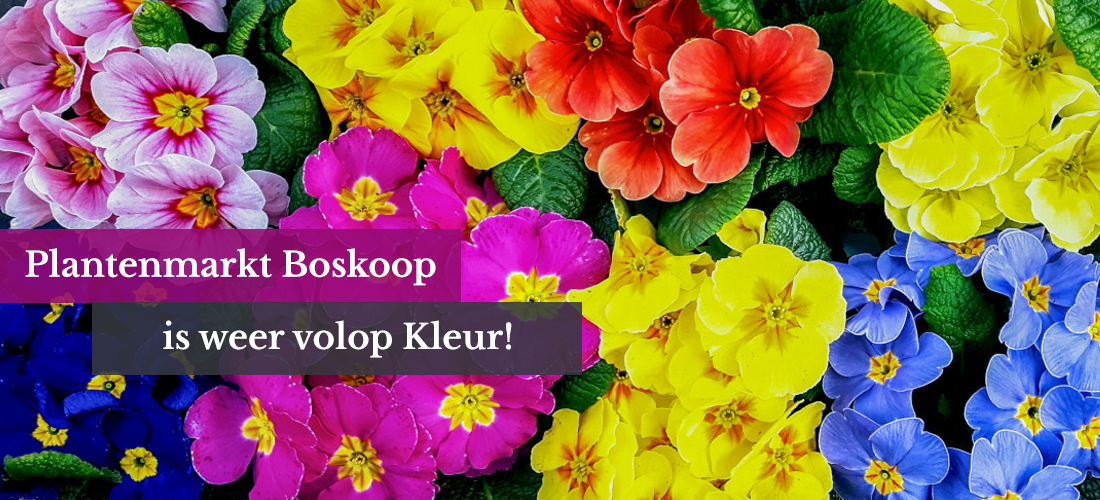 Plantenmarkt Boskoop weer volop kleur